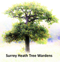 Surrey Heath Tree Wardens